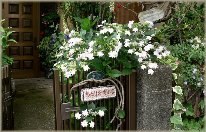 玄関の墨田の花火
