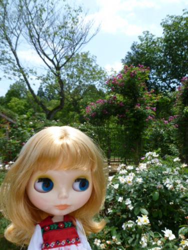 佐倉草ぶえの丘バラ園♪