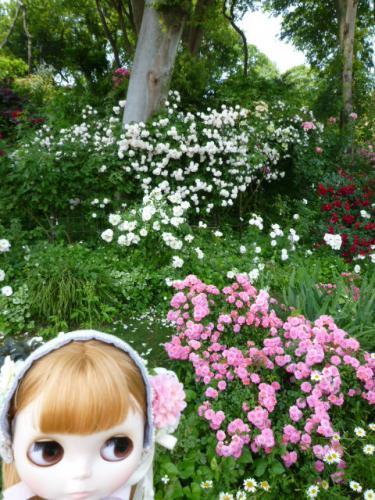 Rose Garden 坂野