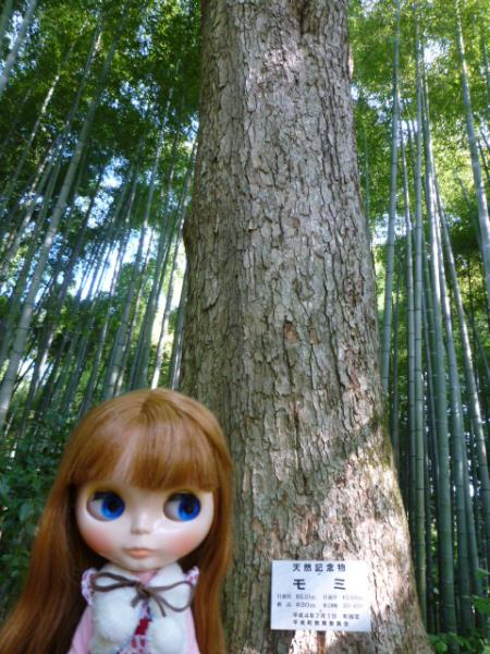 モミの木♪