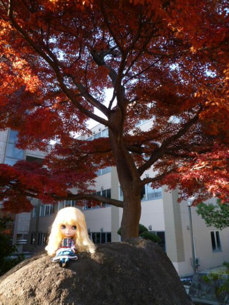 近所の紅葉♪