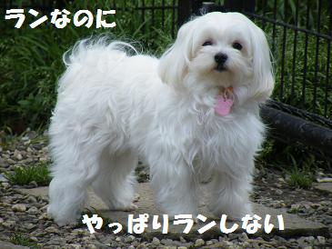 2010_0415入学・東京0007