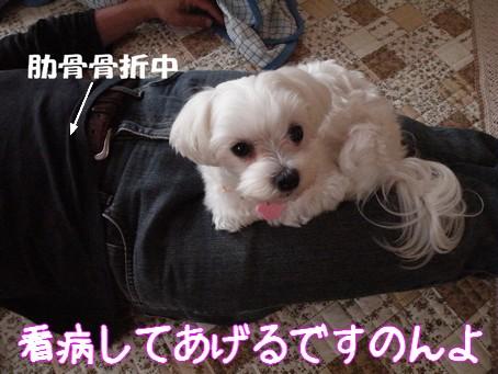 2010_0060706.jpg