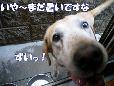 2010_0083101.jpg