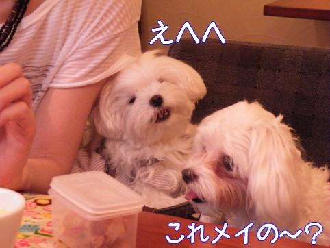 2010_072108.jpg