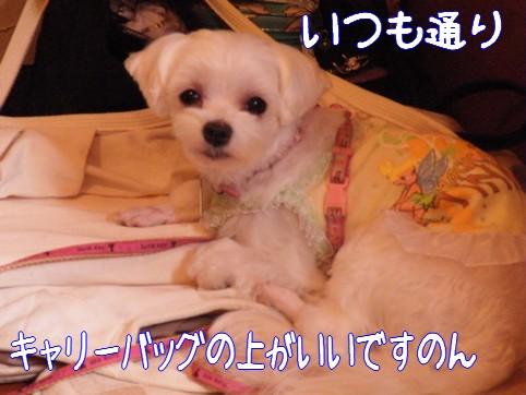 2010_072112.jpg