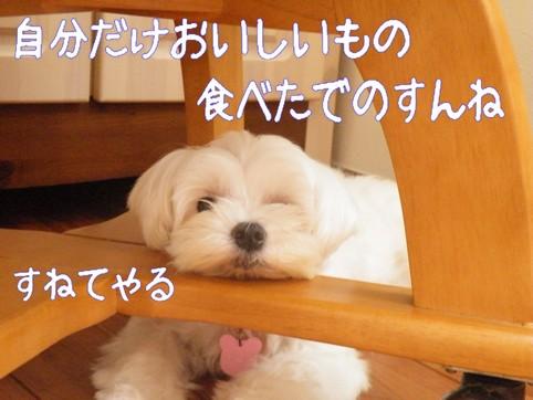 2010_08190022.jpg