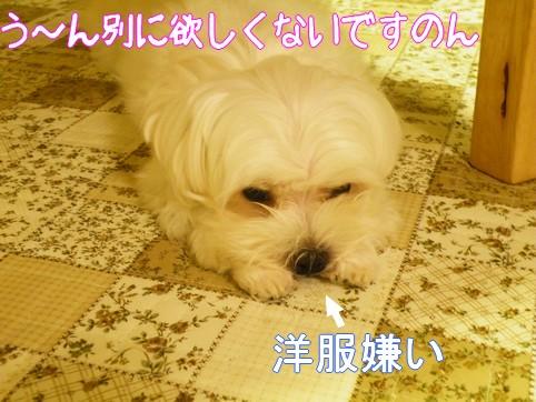 2010_090402.jpg