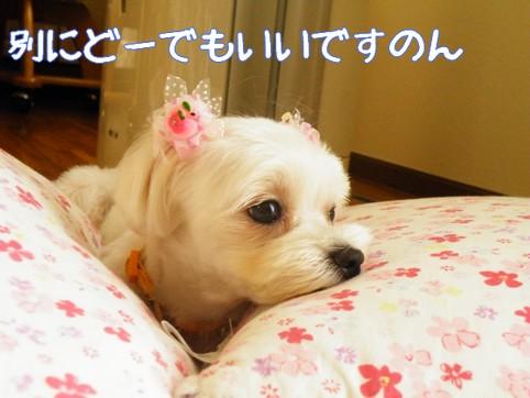 2010_090902.jpg