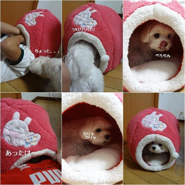 cats11_20111209171434.jpg