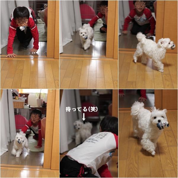 cats55_20120130145738.jpg