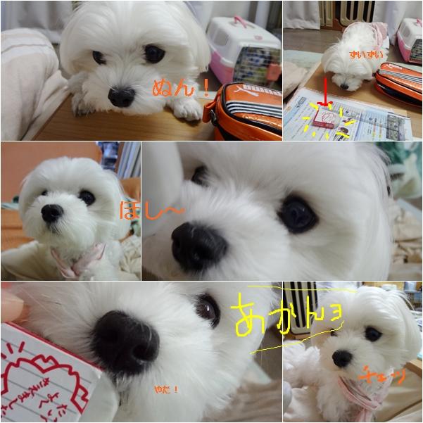 cats_20111209171435.jpg