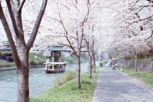 運河沿いの桜並木5 船つき