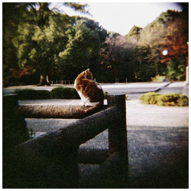 男山の野良猫