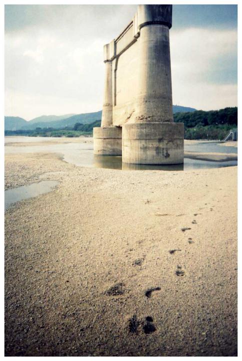 砂地と橋脚