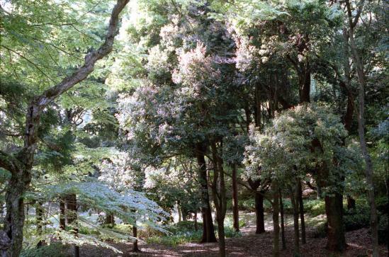 春日大社境内の森
