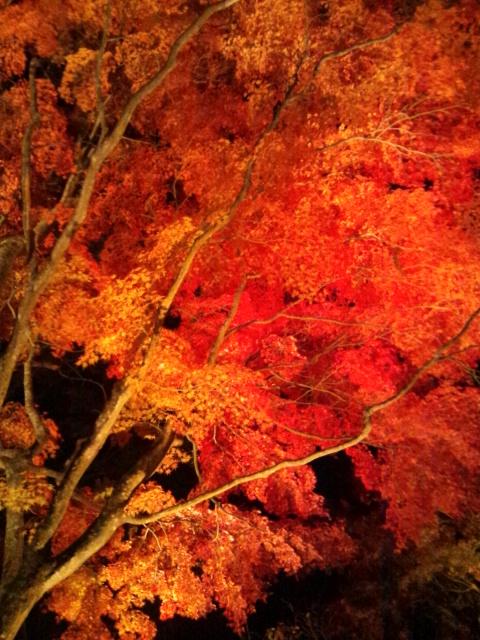 20111103山中湖夜楓