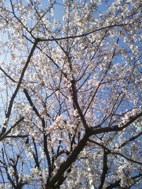 20130322空と桜