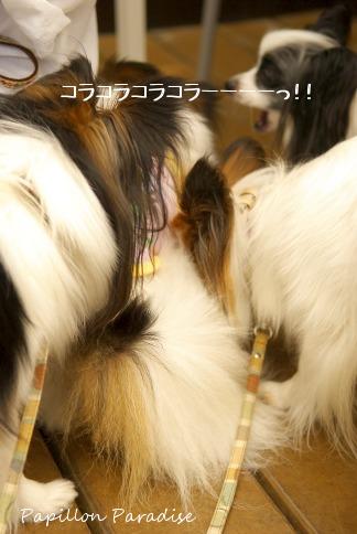 2010052710.jpg