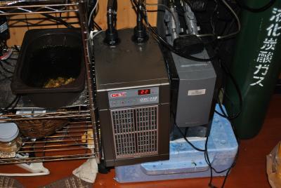 DSC_0002_convert_20100627104908.jpg