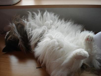隣で寝てるロコ
