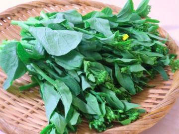 120430小松菜の花