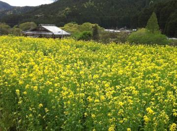 120505京都④