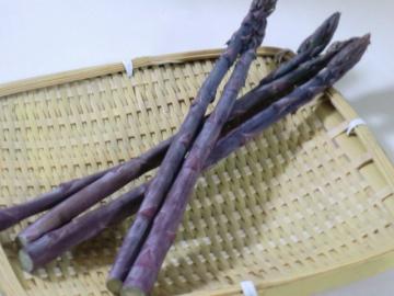 120615紫アスパラ①