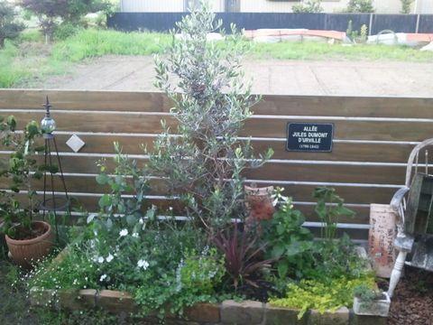 不在後の庭