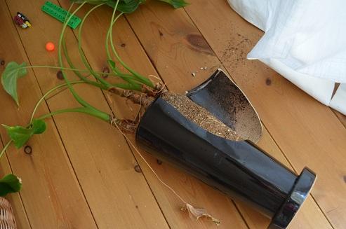 観葉植物破壊