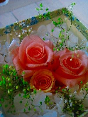 2012_0228_131844-IMG_5791.jpg