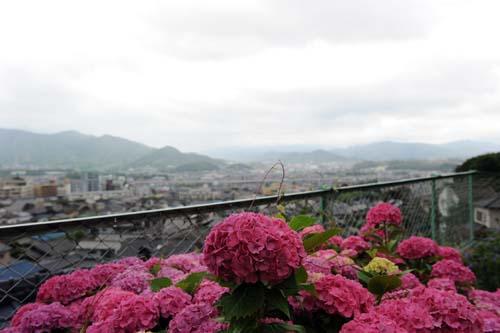 安部山からの眺め