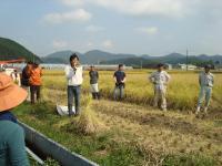 2011稲刈り 004