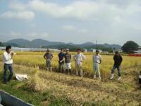 2011稲刈り 005