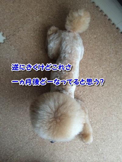 20140922-12.jpg