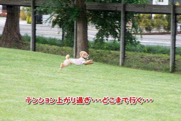 20140929-8.jpg