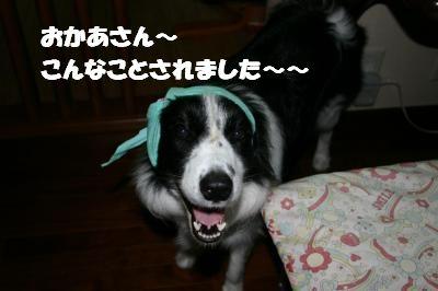 IMG_8818_convert_20100730070057.jpg