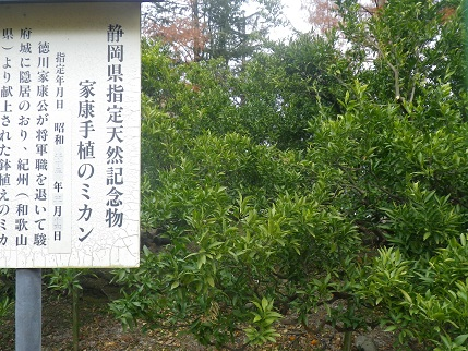 shizuoka 116