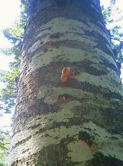 木にぬけがら