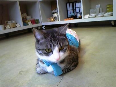 実は私、お香よりジジちゃん(ネコ)の方が興味津々でした(^^;)
