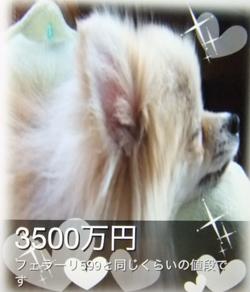 DSCF1089.jpg