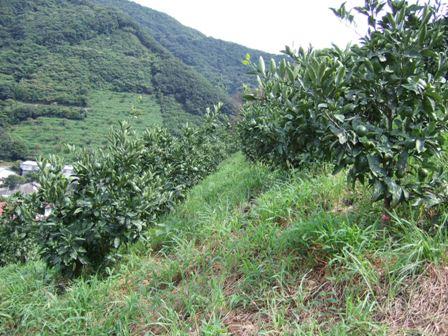 急斜面の畑