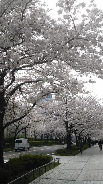 20110410_桜