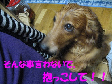 IMG_1243.jpg