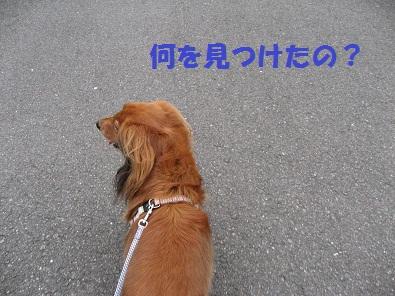 IMG_1485.jpg