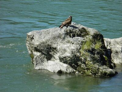 道経岩とんび原