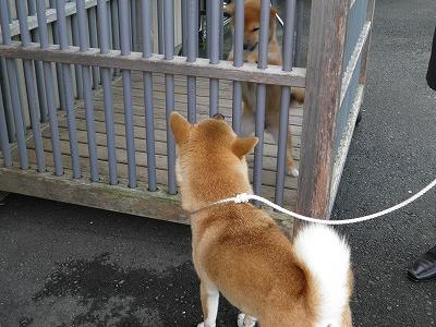 モモと子犬