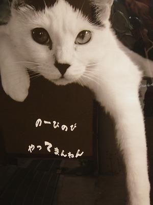 猫ポスタ=