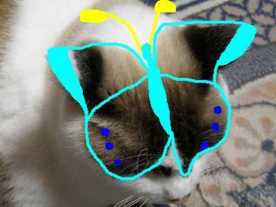 蝶ルー様お絵かき