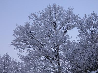 1月5日雪